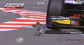 Hot bird in GP2