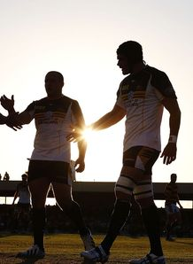 Brumbies at sunset in pre season