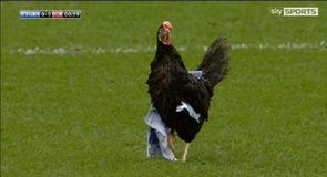 Chicken invades Ewood Park