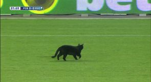 Black cat invades Camp Nou